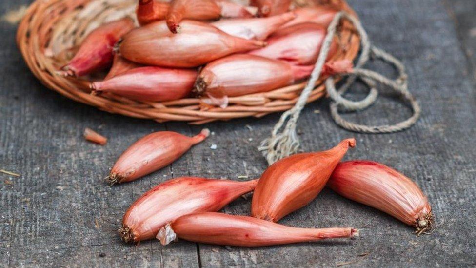 الكراث الفارسي أحد أنواع البصل الإيراني يحتوى مركبات كيميائية قادرة على تقليل مقاومة بكتيريا السل للأدوية