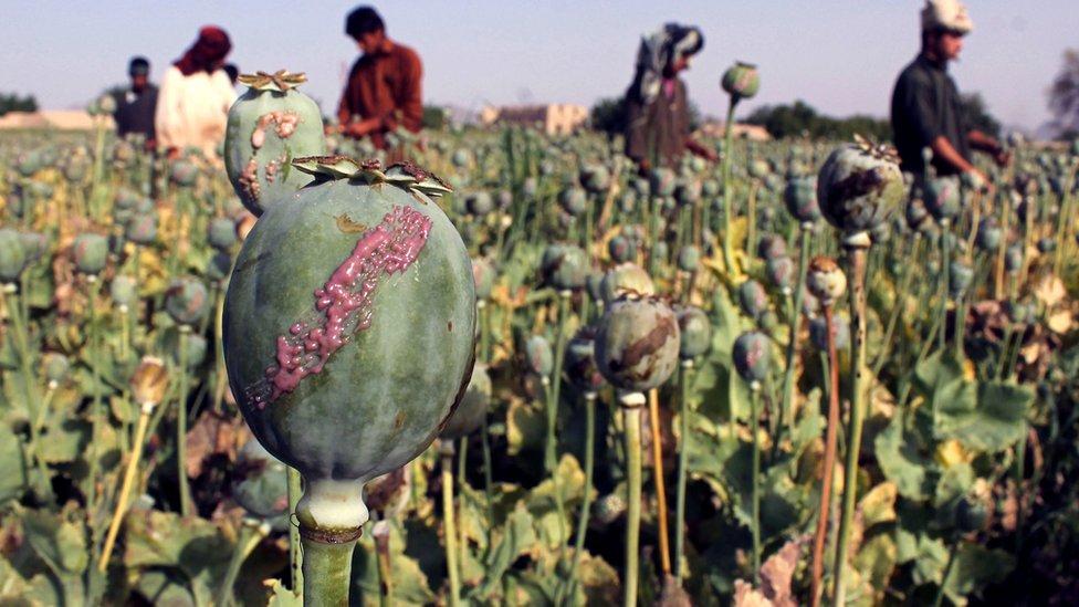أفغانستان المصدر الرئيسي للهيروين في العالم