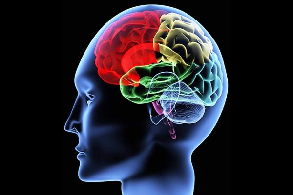 الموسيقى وتعلم اللغات يعززان كفاءة عمل الدماغ البشري