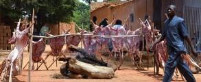 السلطات النيجيرية: حافظوا على الأشجار في عيد الأضحى