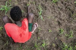 طفل سوداني كان يقاتل في صفوف مجموعة مسلحة سابقا يشارك في درس زراعة في مدرسة يتعلم فيها عن البذور والنباتات في بيبور