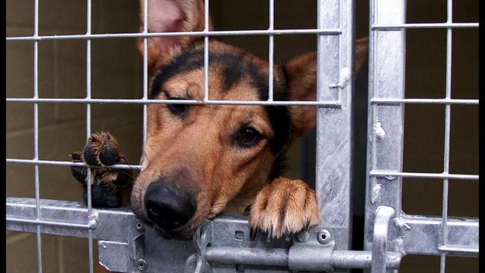 جمعيات الرفق بالحيوانات طالبت الحكومة بالتحرك