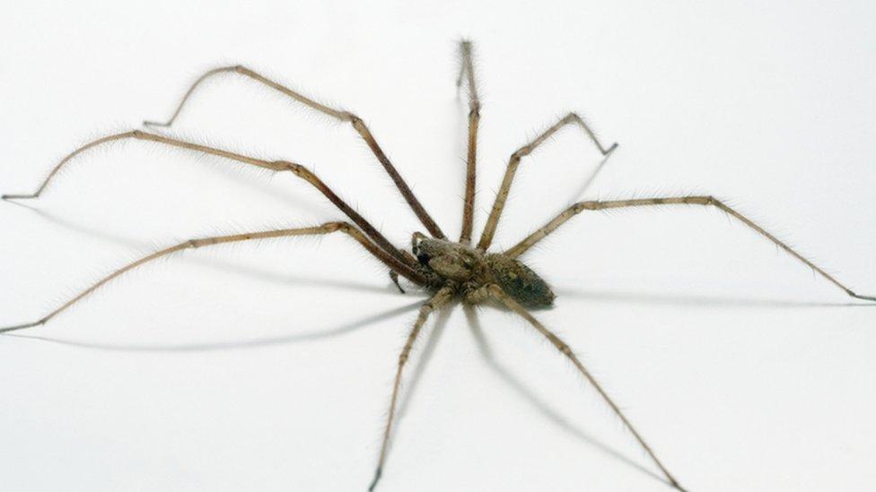 الملايين من الناس حول العالم يصابون بالرعب من العناكب