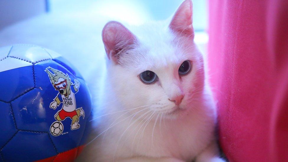 اختارت اللجنة المنظمة لنهائيات كأس العالم 2018 بروسيا القط الأصم