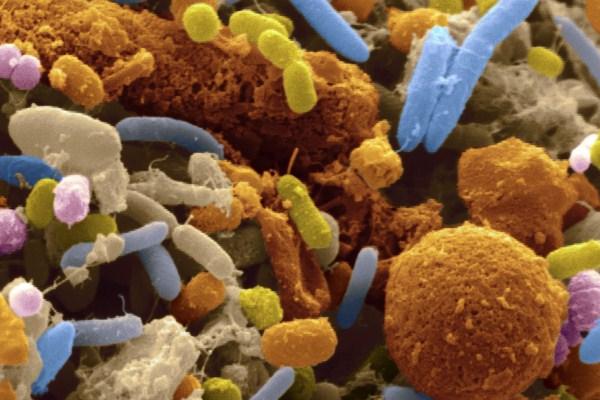 يتعايش البشر والميكروبات على وقع دقات طبول حرب منذ منتصف القرن التاسع عشر