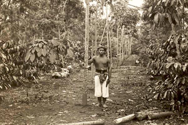 عامل في قهوة هولندية ومزرعة مطاطية، جاوا، 1900.