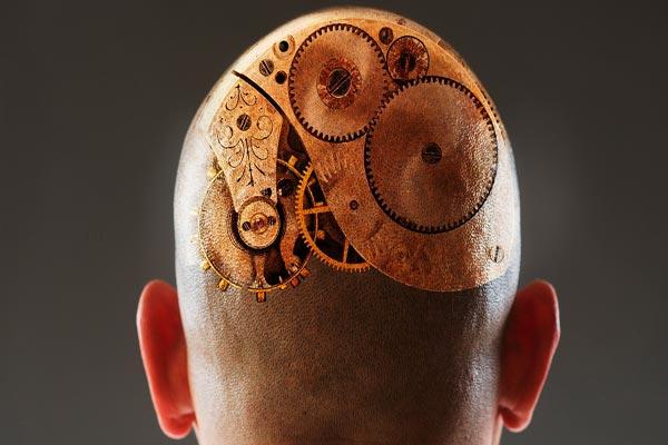 العقول تطورت تدريجيًا