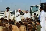 مليار وستة مائة مليون واردات السعودية من المواشي في سبعة اشهر