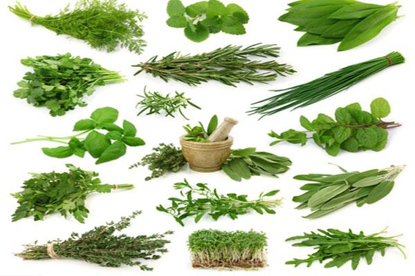 أنواع من الأعشاب الصالحة للأكل