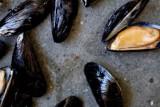 ثلاث خطوات لتنظيف بلح البحر