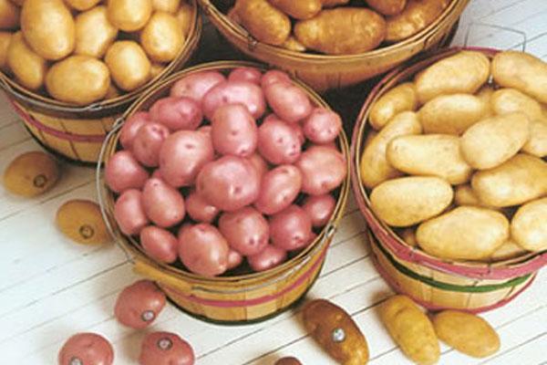 البطاطا العادية والحلوة