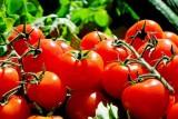 خمسة أسباب تؤكد أهمية أكل الطماطم باستمرار
