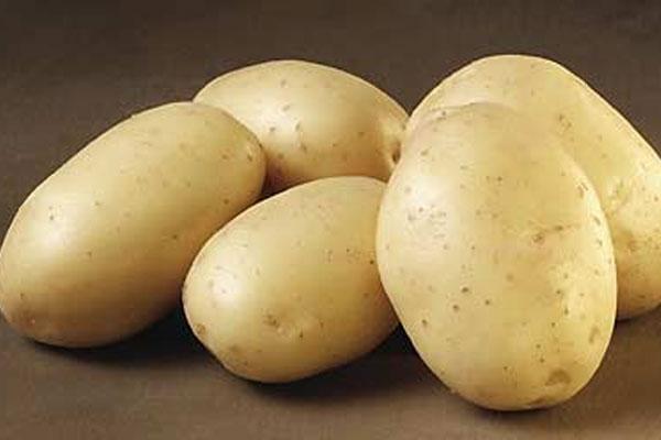 البطاطا أول الخضَر التي تنمو في الفضاء