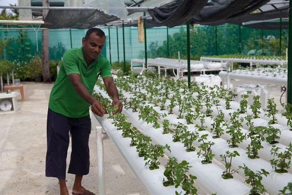 جزر المالديف السياحية تسعى للتخلص من النفايات بطرق بيئية