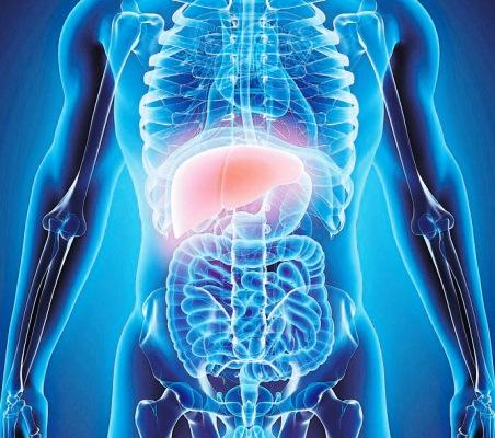 دراسة حديثة تقول إنّ الدهون المتراكمة في الكبد تضر بالأعضاء الحيوية الأخرى
