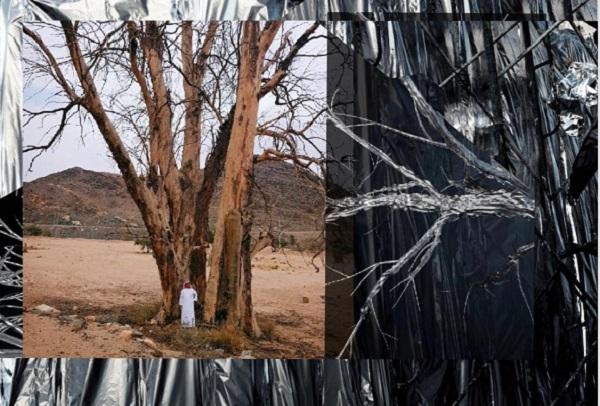 الفنان السعودي عبدالله العثمان يجعل من السدر أشجارا خالدة