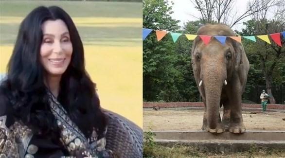المغنية شير في باكستان مستبقةً نقل فيل إلى كمبوديا