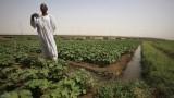 مزارع سوداني