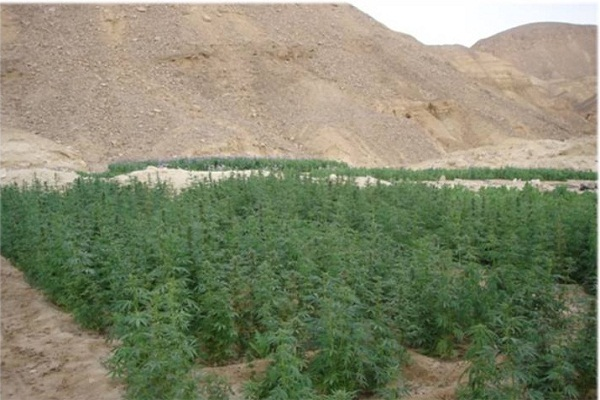 اتهامات للجيش بالتقصير في محاربة زراعة المخدرات في سيناء
