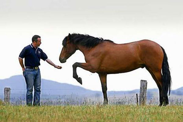 الحصان يشعر بصاحبه