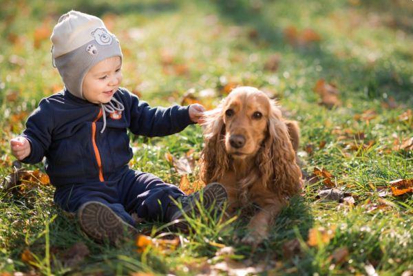 الكلاب من شأنها مساعدة الأطفال على تقوية المناعة ضد الحساسية