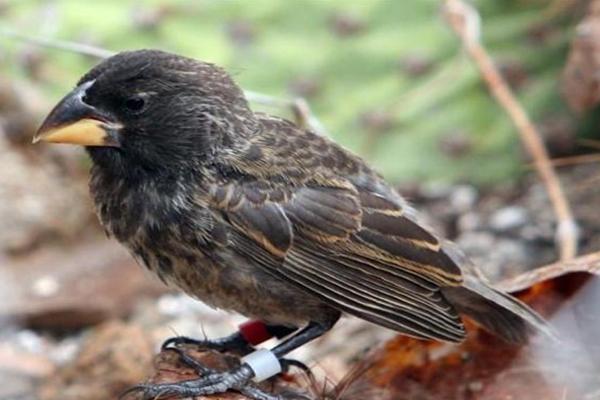 نشوء فصيلة جديدة من الطيور