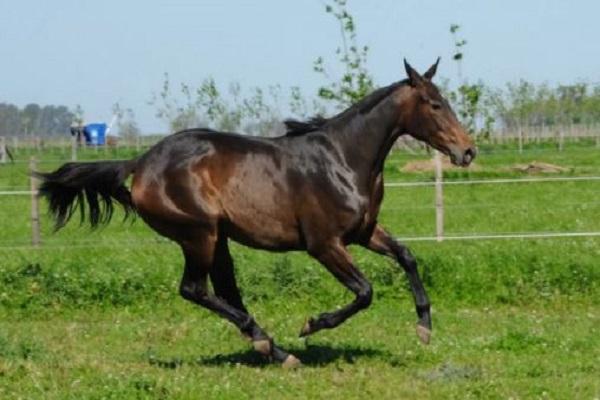 خيول معدلة وراثيًا... أسرع وأقوى وتقفز أعلى