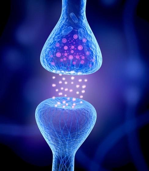 علماء يشخصون الانزيم المسؤول عن ترميم الاعصاب