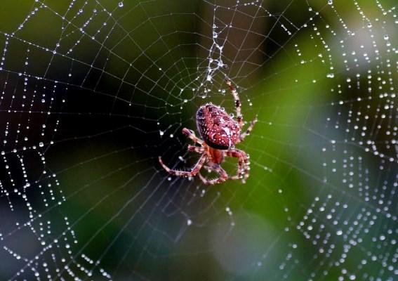 علماء ألمان ينتجون أنسجة قلب من خيوط العنكبوت