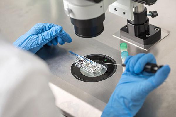 استخدام خلايا جلدية بدلا من الحيوانات المنوية