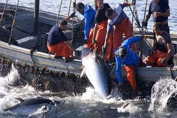 بطلان اتفاقية الصيد البحري بين الإتحاد الأوروبي والمغرب بسبب الصحراء