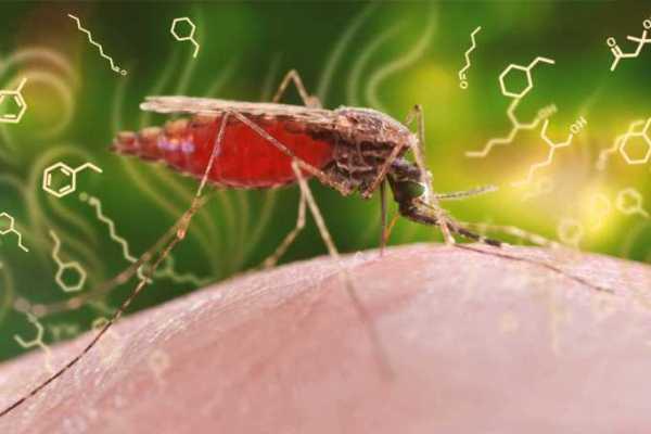 الملاريا تحتفظ