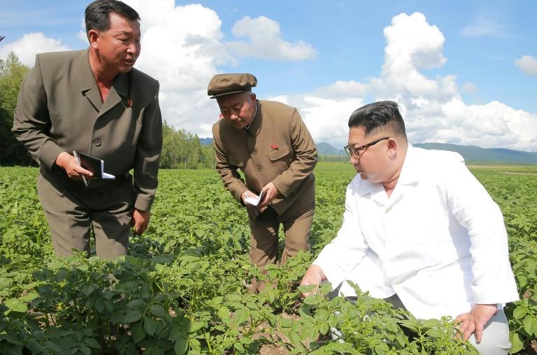 كيم يتفقد حقول البطاطا