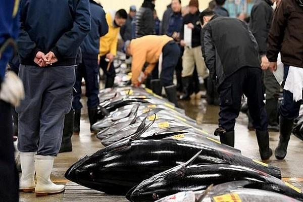 سوق سمك شهيرة تعرقل مشاريع النقل لأولمبياد طوكيو 2020