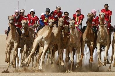 السعودية تعتزم تنظيم مسابقتين للهجن والخيول