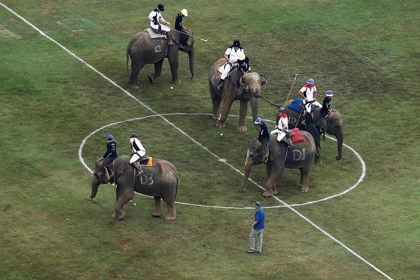 تايلاند تستخدم الأفيال لمكافحة المراهنات قبل المونديال