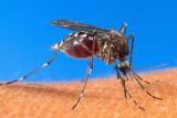 الصحة العالمية: القضاء على الملاريا
