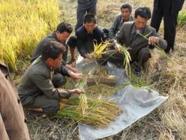 انخفاض الإنتاج الغذائي لكوريا الشمالية في 2018