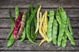 خصائص وفوائد اللوبياء الخضراء