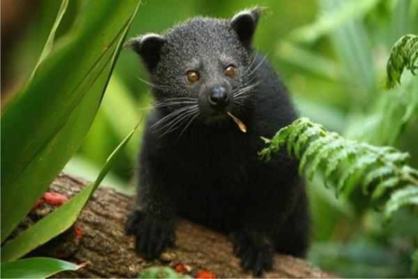 صغار الدببة السوداء كانت من بين الحيوانات المعروضة للبيع على فيسبوك