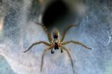 سم العناكب لعلاج سرطان الجلد