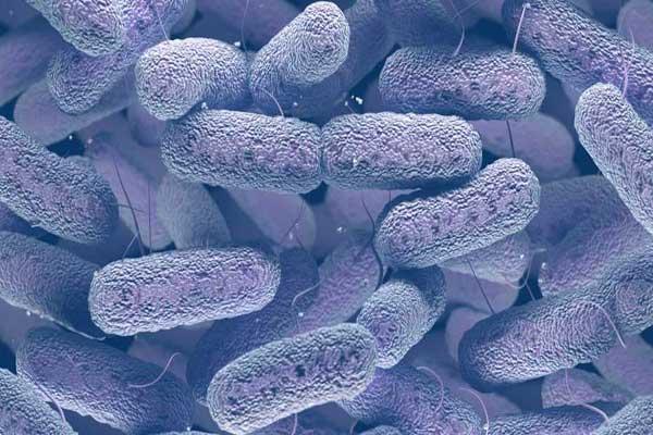 افترض أن البكتيريا تنقسم إلى اثنتين كل ١٥ دقيقة، فكم سيصبح عدد الواحدة بعد ٣ ساعات؟