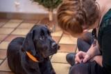 تبني حيوان أليف يمكن أن يساعد في تخفيف أعراض الاكتئاب !