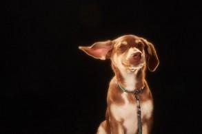 Mungo & Maud تتعاون مع ميلبيري لأزياء الحيوانات الأليفة