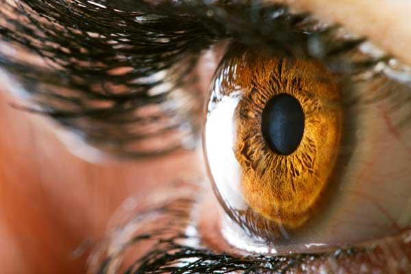 يعتبر النوع الجاف من تنكس البقعة الناجم من تقدم السن من أشهر أنواع أمراض العين