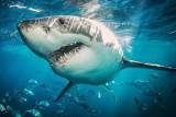 هل يحمل القرش سر علاج أمراض الشيخوخة
