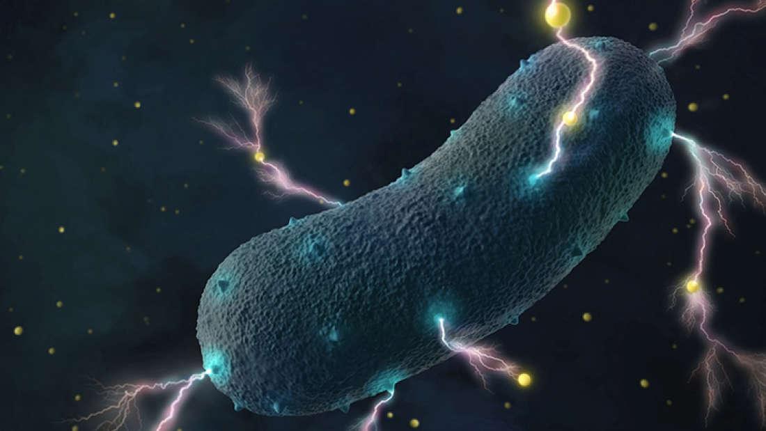 العلماء يأملون بالتمكن في المستقبل من تسخير الطاقة التي تولدها هذه البكتيريا لتشغيل منظومات