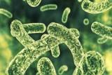 بكتيريا الأمعاء قد تلتهم الأدوية قبل بلوغ أهدافها !