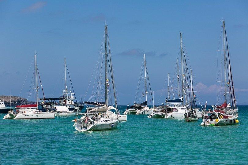 صيد أسماك القرش وسباق مع السلاحف للحفاظ على الأنواع الرمزية في جزر غالاباغوس
