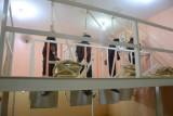 العراق ينفذ حكم الإعدام بمجموعة من عناصر داعش